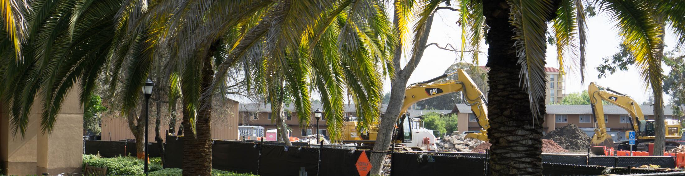 view construction through palm trees