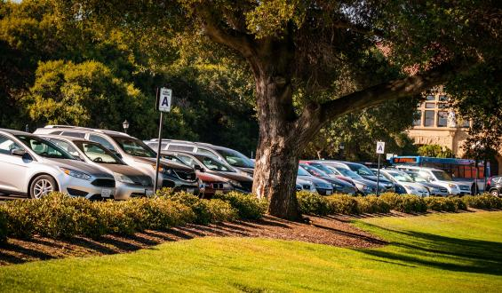 cars parked beneath a tree